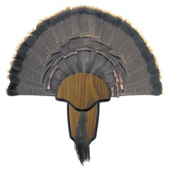 Hunters Specialties Inc Tail & Beard Mounting Kit Turkey